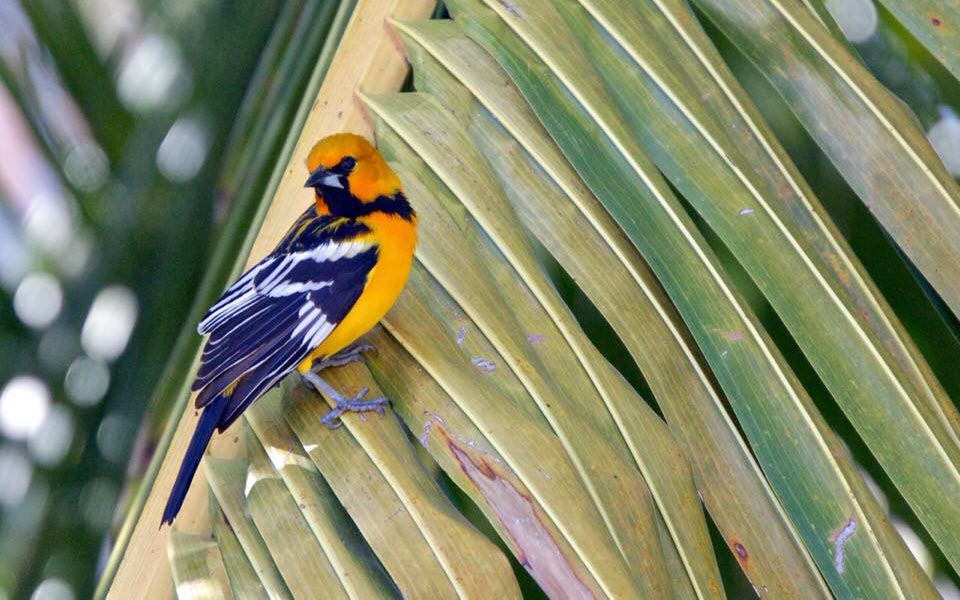 Bird Watching Tour at Playa Grande Costa Rica
